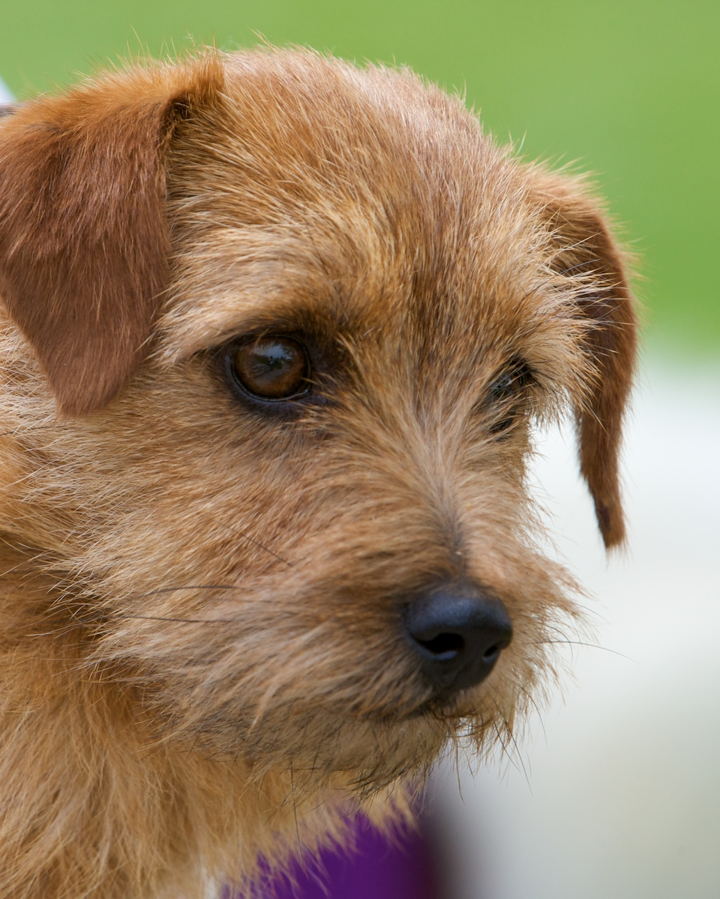 Small Breed Types Of Dogs