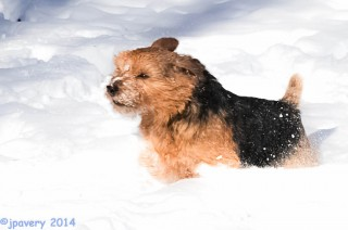 Snowdog! Axl Avery (John Avery Photo)