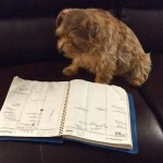 Cutter is studying his calendar to make sure he doesn't miss the Fall Festival - Oct. 11 & 12 in Walpole, Mass.
