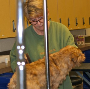 Michelle Seawald was hard at work grooming GCH Dexter