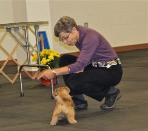 Judge Carol Falk encouraged a puppy to 'go to mom' but the puppy wasn't having any of that!