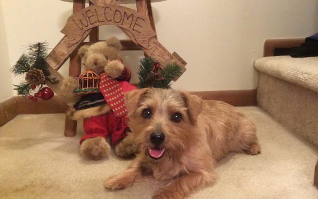 Toula ... waiting for Santa (Judy Carbaugh)