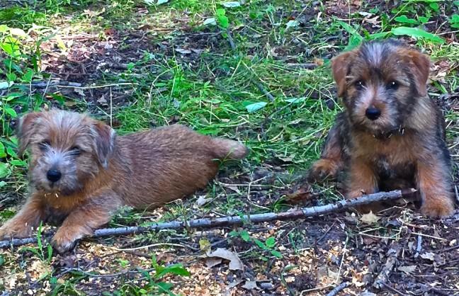 Lini's puppies