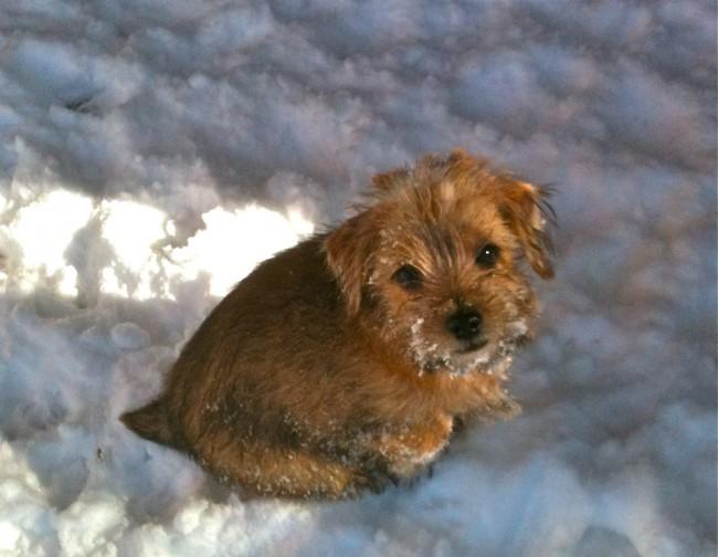 Judith Felton's 'snow bunny' Mimi.
