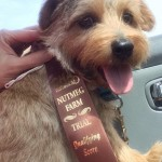 Felicia Moran's Cutter passed his barnhunt instinct test.Felicia Moran's Cutter passed his barnhunt instinct test.