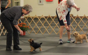 Peggy Metcalf (left) and Judith Felton in the ring for the Best Puppy in Show competition.