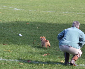 Lini Federici watches one of her dogs take off after the lure. (Sheila Foran Photo)