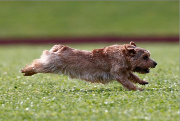 Stretch out and run!!!!